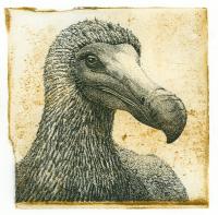 Dodo - Han van Hagen